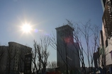 冬の陽射し