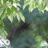夏の日差し(^。^)