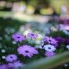 花壇・・・④