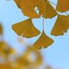 秋の象徴(^。^) 其の六