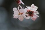 春が来た vol.5