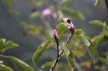 季節はずれの木蓮