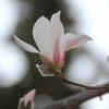 春が来た vol.4