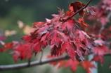 秋の気配 其の2
