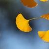 秋の象徴(^。^) 其の五