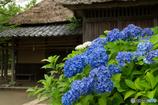 紫陽花と古民家