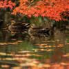 紅葉の棲み処