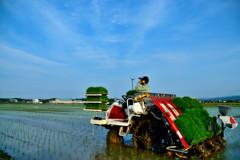 松江百景 明るい農村 今時の田植え