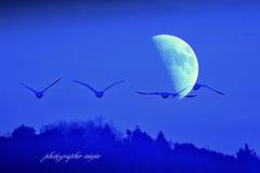 ninjinの松江百景 Moon & Swan 1