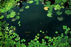 ninjinの松江百景 英国庭園2