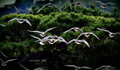 ninjinの松江百景 鳥のいる風景 1