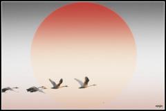 ninjinの松江百景 白鳥行図
