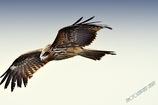 ninjinの松江百景 鳥のいる風景2