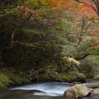 CANON Canon EOS 6Dで撮影した(江竜田の滝遊歩道 2014-11(2))の写真(画像)