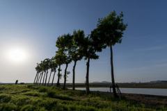 初夏の稲架木