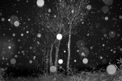 稲架木に降る雪