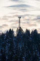 林の中の鉄塔