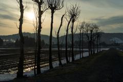 古稲架木の風景