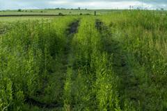 草原への轍