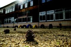 松ぼっくりと木造校舎