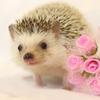 ハリネズミに花束をそえて…