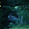 SONY DSLR-A900で撮影した風景(HOTARU☆)の写真(画像)