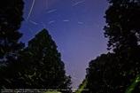 Glowfly of starlight☆