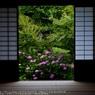SONY DSLR-A900で撮影した(Rainy season☆)の写真(画像)
