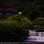 SONY DSLR-A900で撮影した(Scenery with firefly☆)の写真(画像)