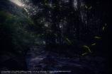 Firefly of hazy moon☆