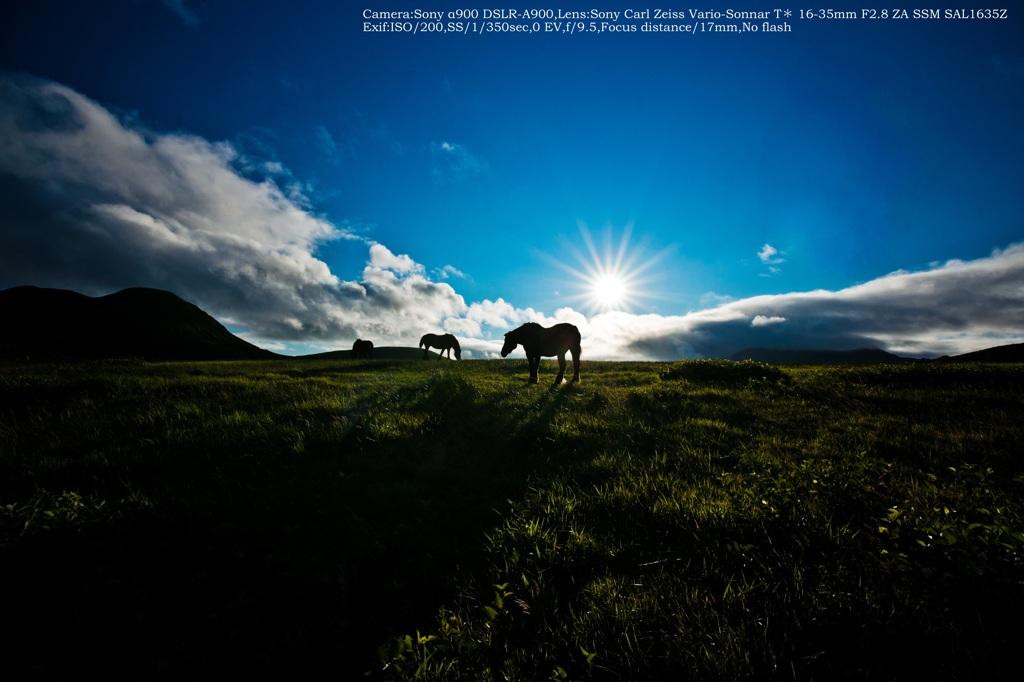Dark horse☆