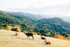 奈良県若草山