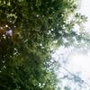 春と太陽ともみじ2