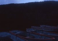 MAMIYA RB67 PROFESSIONAL SDで撮影した(夜明け前)の写真(画像)