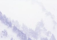 MAMIYA RB67 PROFESSIONAL SDで撮影した(雪と松の世界)の写真(画像)