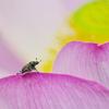 虫のお花見