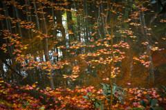 落ち葉の池