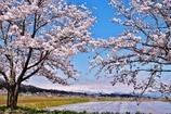 桜と飯豊連邦