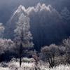霧氷の輝き