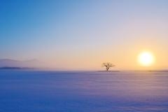 美しい朝の光