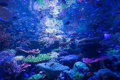 名古屋港の珊瑚礁