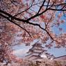 鶴ヶ城と桜④