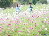 in the Flower Field