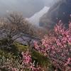梅溪の春 Ⅱ