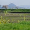 春の近江富士