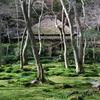 京都フレクサレット 京のむき出し iv