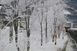 寒い街路樹