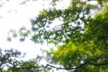 もみじと木漏れ日