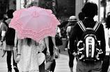 ピンクのパラソル