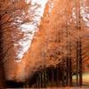 赤い並木道